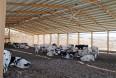 Cyperns mælkebønder er udfordret af varme og vand