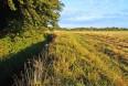 Manglende juridisk grundlag for træk i landbrugsstøtten
