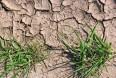 Vejret påvirker mælkeproduktionen