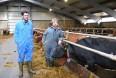 Færøske mælkeproducenter tror på fremtiden