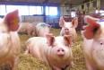 Tid og penge afholder landmænd fra at ansætte elever