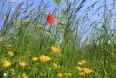 Reducer stress niveauer efter fodring planteekstrakter