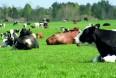 """Fremtidens mælkeproduktion sælger ikke """"bare"""" mælk"""