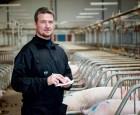 40 FEso pr. fravænnet gris - er det realistisk?