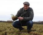 Hvordan udnytter vi bedst efterafgrøderne?