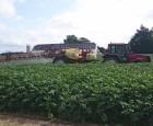 Reglone-forbud sætter dansk kartoffelproduktion under pres