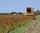 Dansk quinoa snart flyveklar