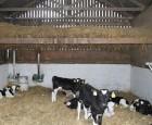 Godt mælkefoder giver bedre klassificering