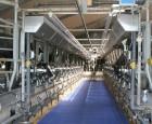 Reducér din fremstillingspris på mælk