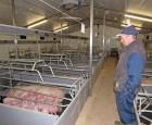 Britisk svineproducent tror påfremtiden