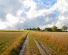 Landmænd risikerer at miste efterløn