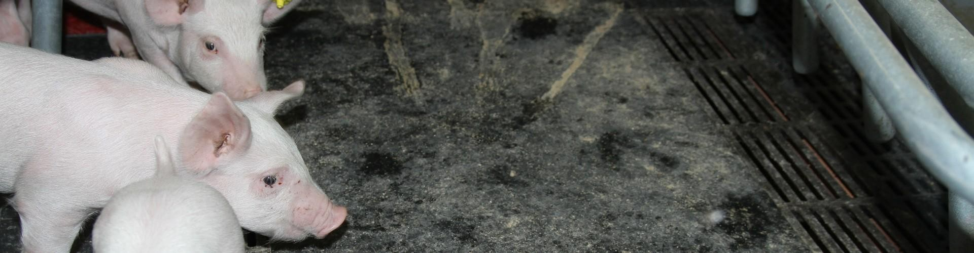 Transportbånd fra grusgrav blev til gummimåtter