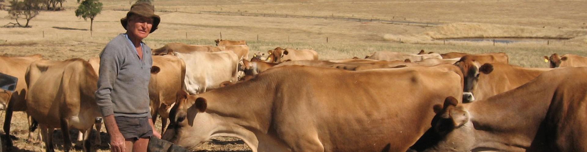 Mælkeproducenter dropper mejeriet