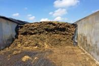 Dårlig management i ensilagestakken afsløres af koen