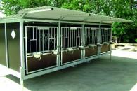 Kalveopdræt og leasing
