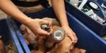 Fibre måske et alternativ til antibiotika