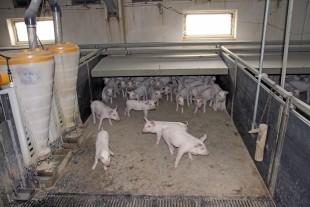 Et vedvarende lavt foderforbrug