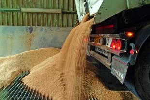 Skal kornet sælges i høst...
