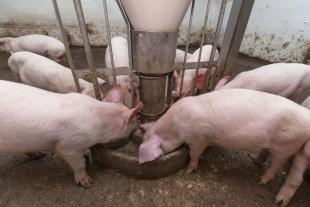 Lavere foderomkostninger i sigte