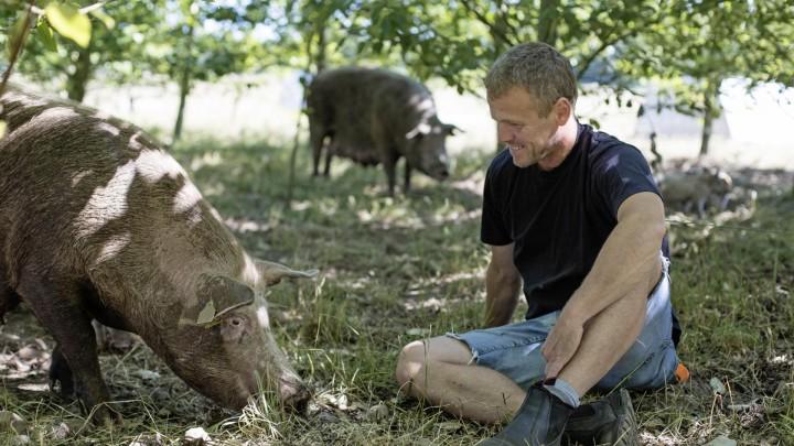 Historien om den glade gris sælger