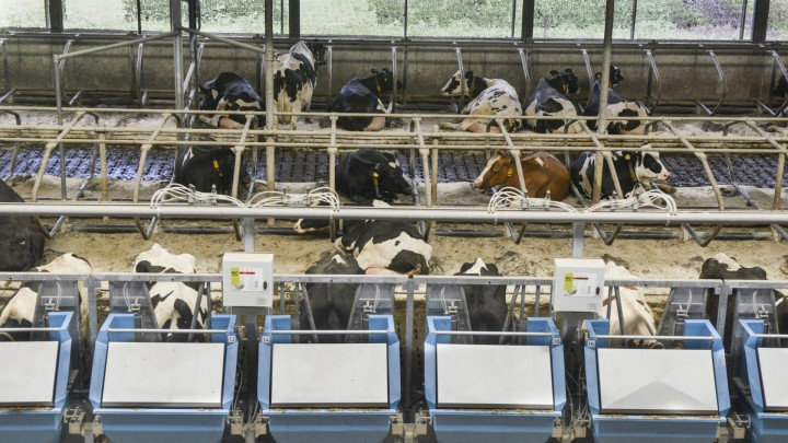 Nyt nøgleindeks vil skære 10 procent af foderomkostninger