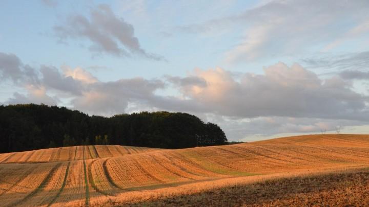 Fremtidige ejerformer og landmænd i dansk landbrug
