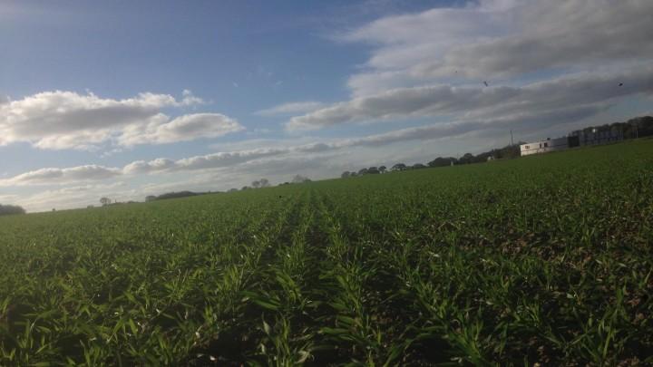 Markskribent: Optimalt efterår for dansk landbrug