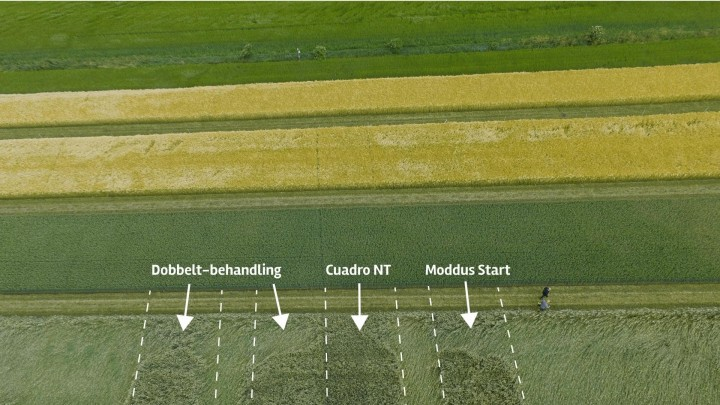 Sådan gik det med vækstregulering af korn i år