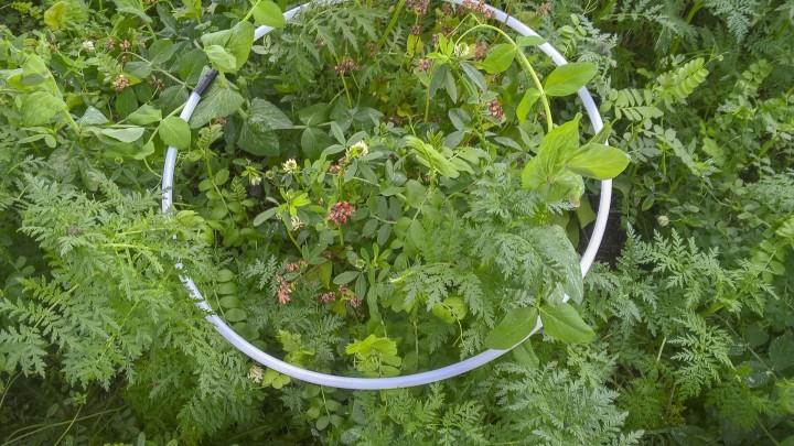 Regler forhindrer positiv effekt af efterafgrøderne
