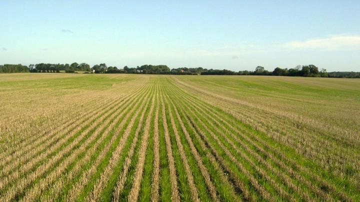 Græs - det sikre valg af efterafgrøde