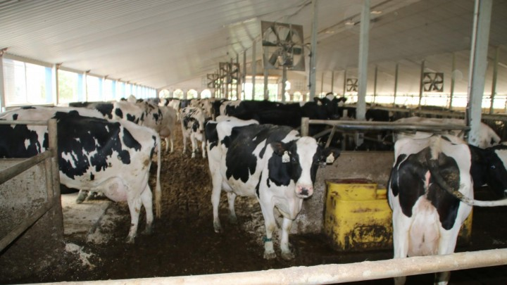 Hollandske landmænd foretrækker Ontario