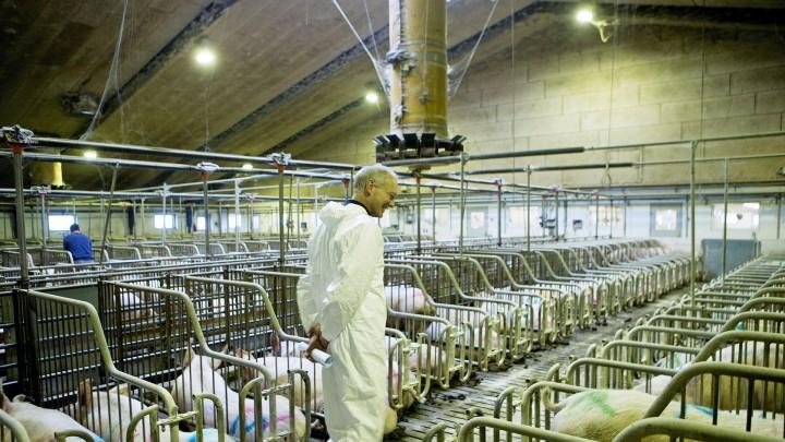 Valle kan stadig være et aktuelt fodermiddel