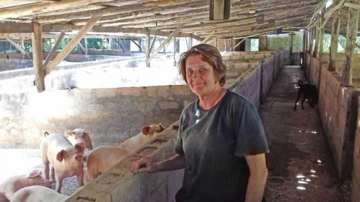 Svineproduktionen i Jamaica erpresset