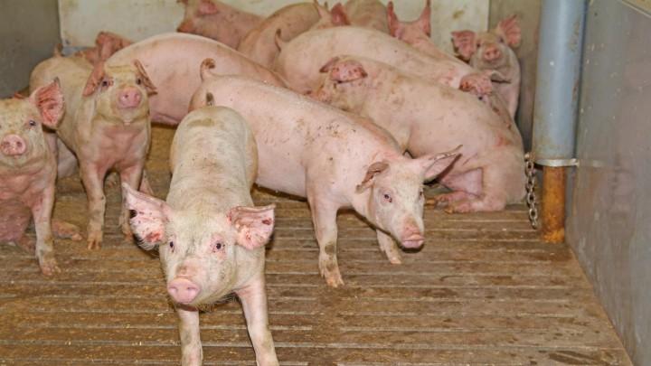 Resistens - set fra den praktiserende dyrlæge
