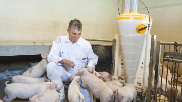 Bedre sundhed og mere ens grise