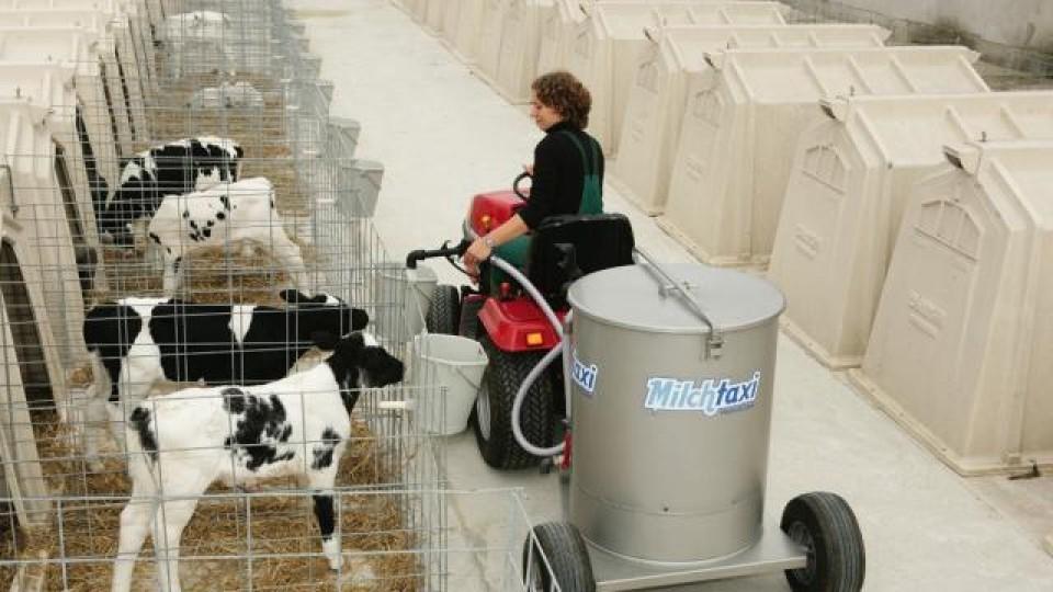 pasteuriseret mælk